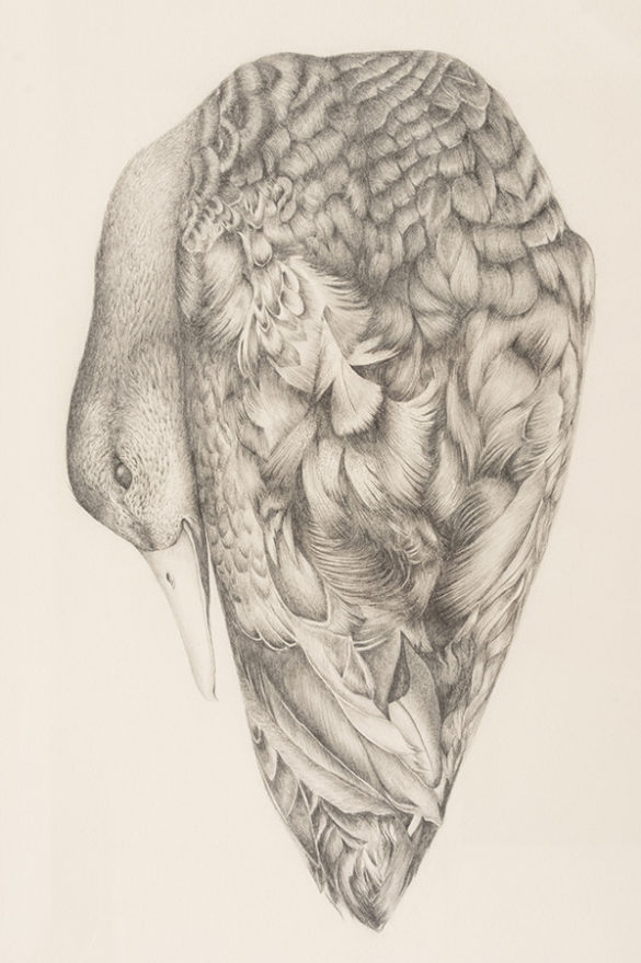 Graphite on paper artwork by Yukon artist Rebekah Miller.